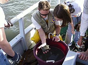 Fish caught in bottom trawl
