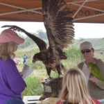earthday2012-eagle